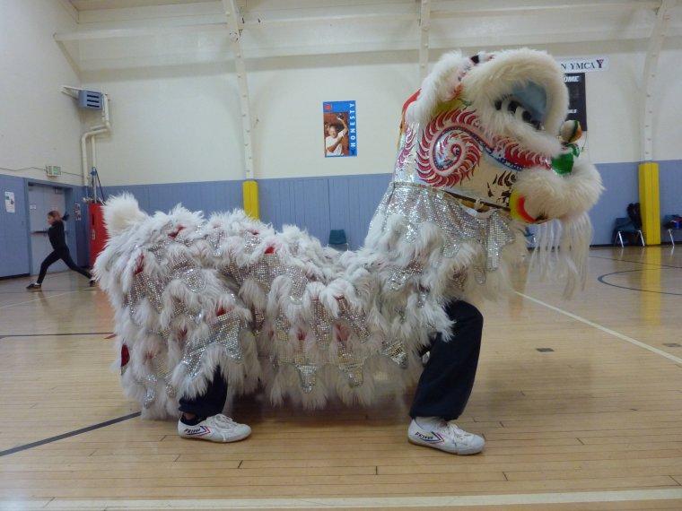 The Lion Horse Lion Blogs